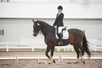 Majestic Farm Dressage Show